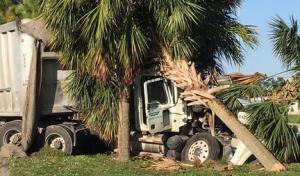 truck tree